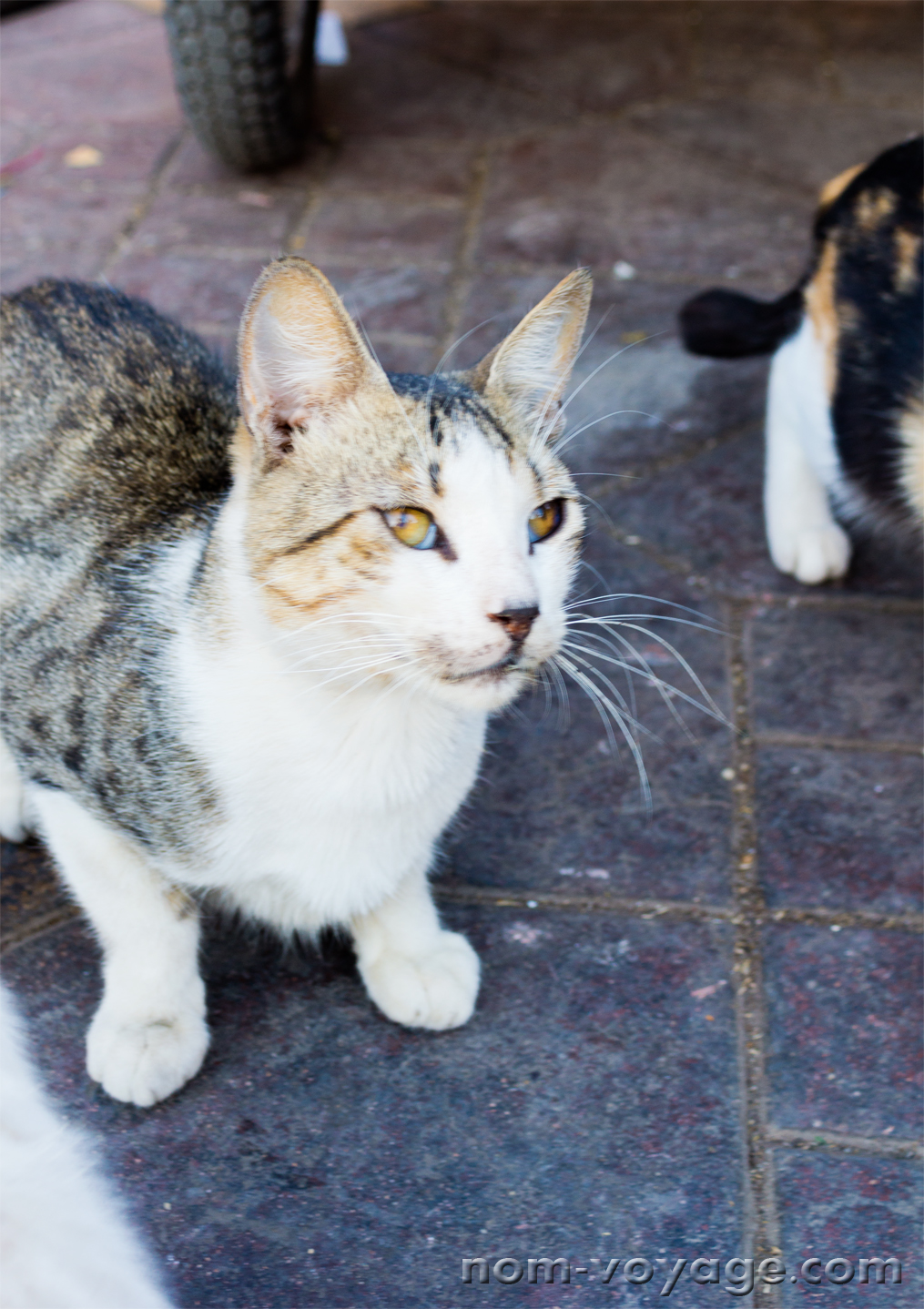 Another little cat in Jemaa El Fna who loved the cat treats we brought.
