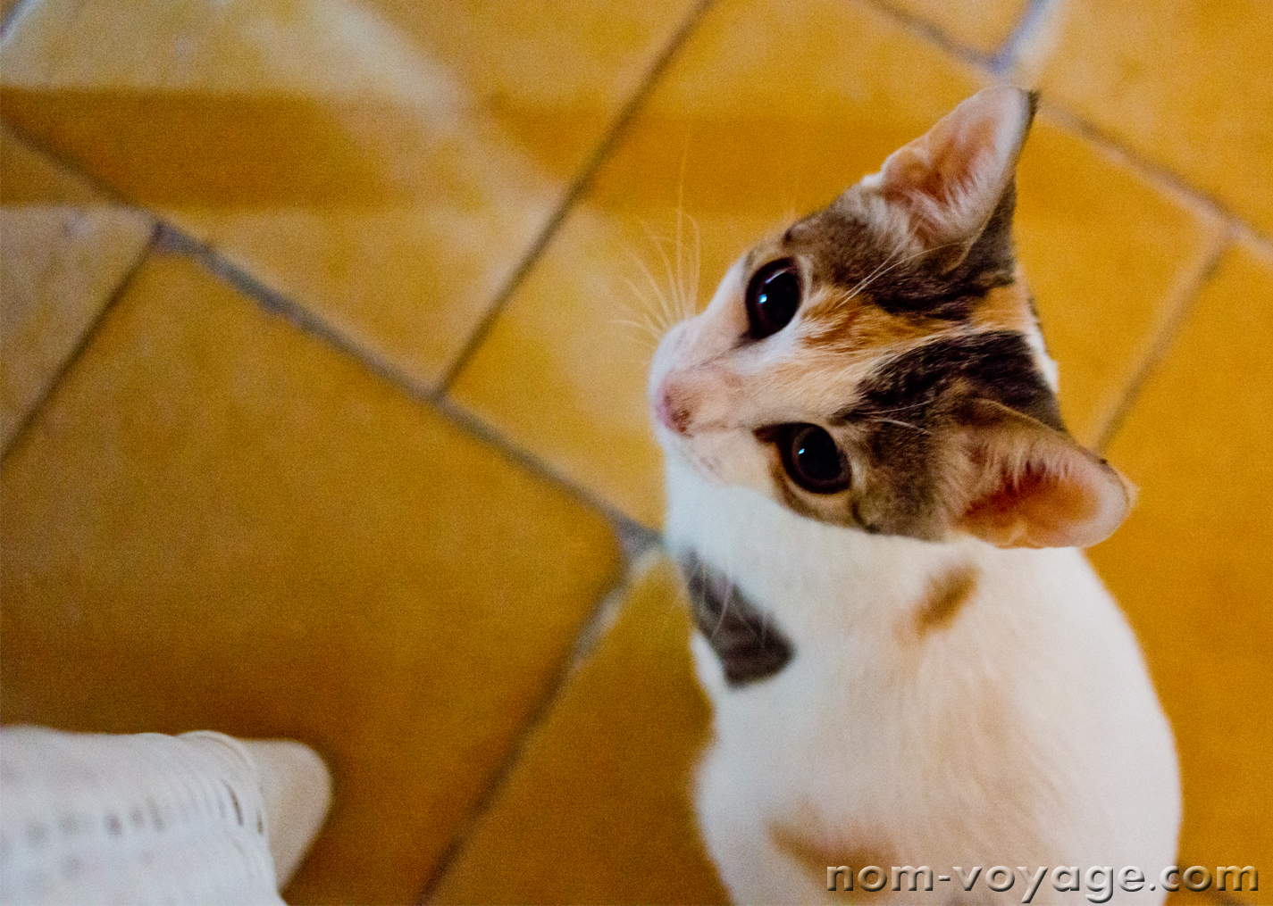 This tiny terrified little kitten finally got up the nerve to approach our table inside the Kasbah in Merzouga.
