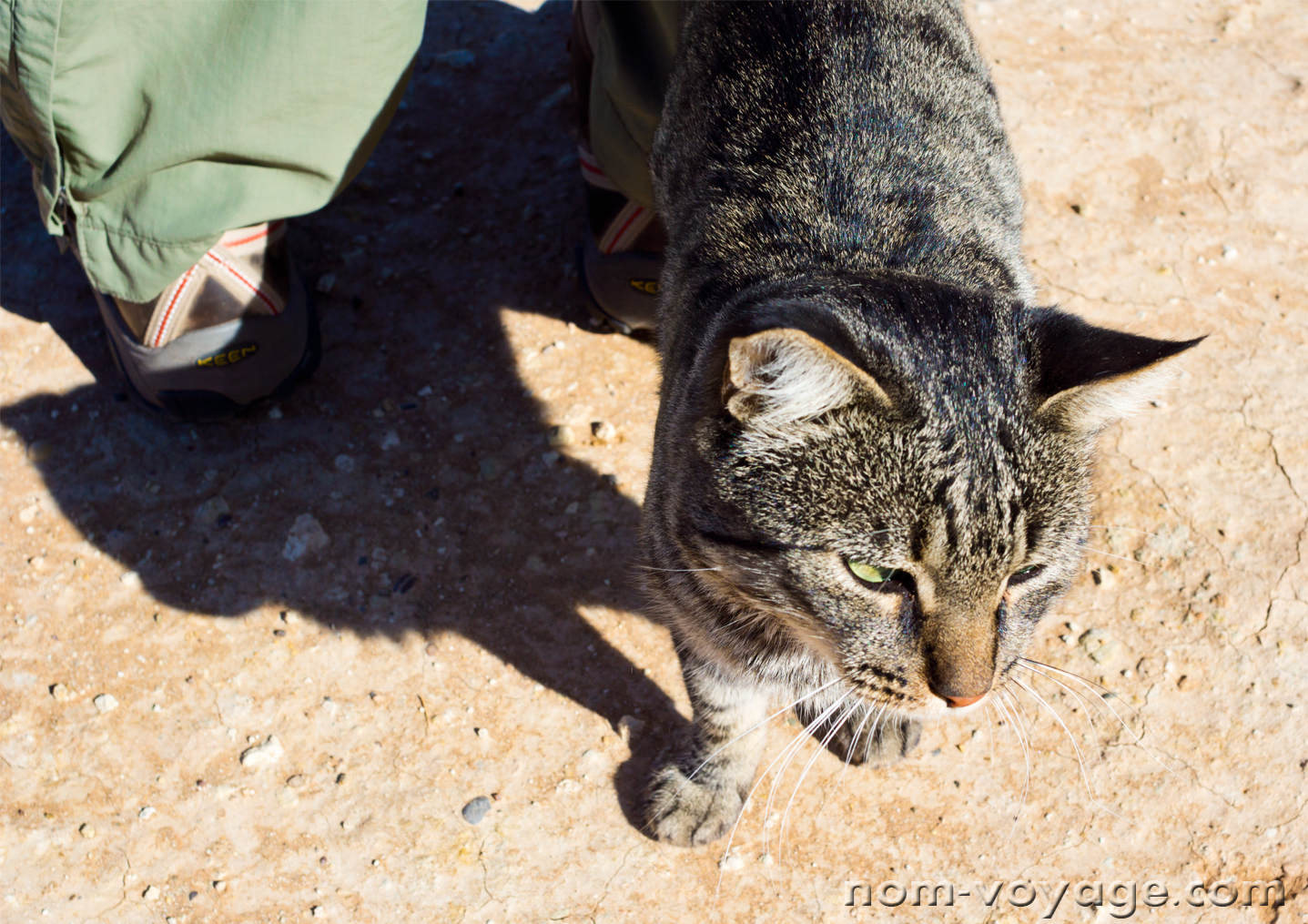Super friendly rest stop kitty, living with the Berbers at the wells.