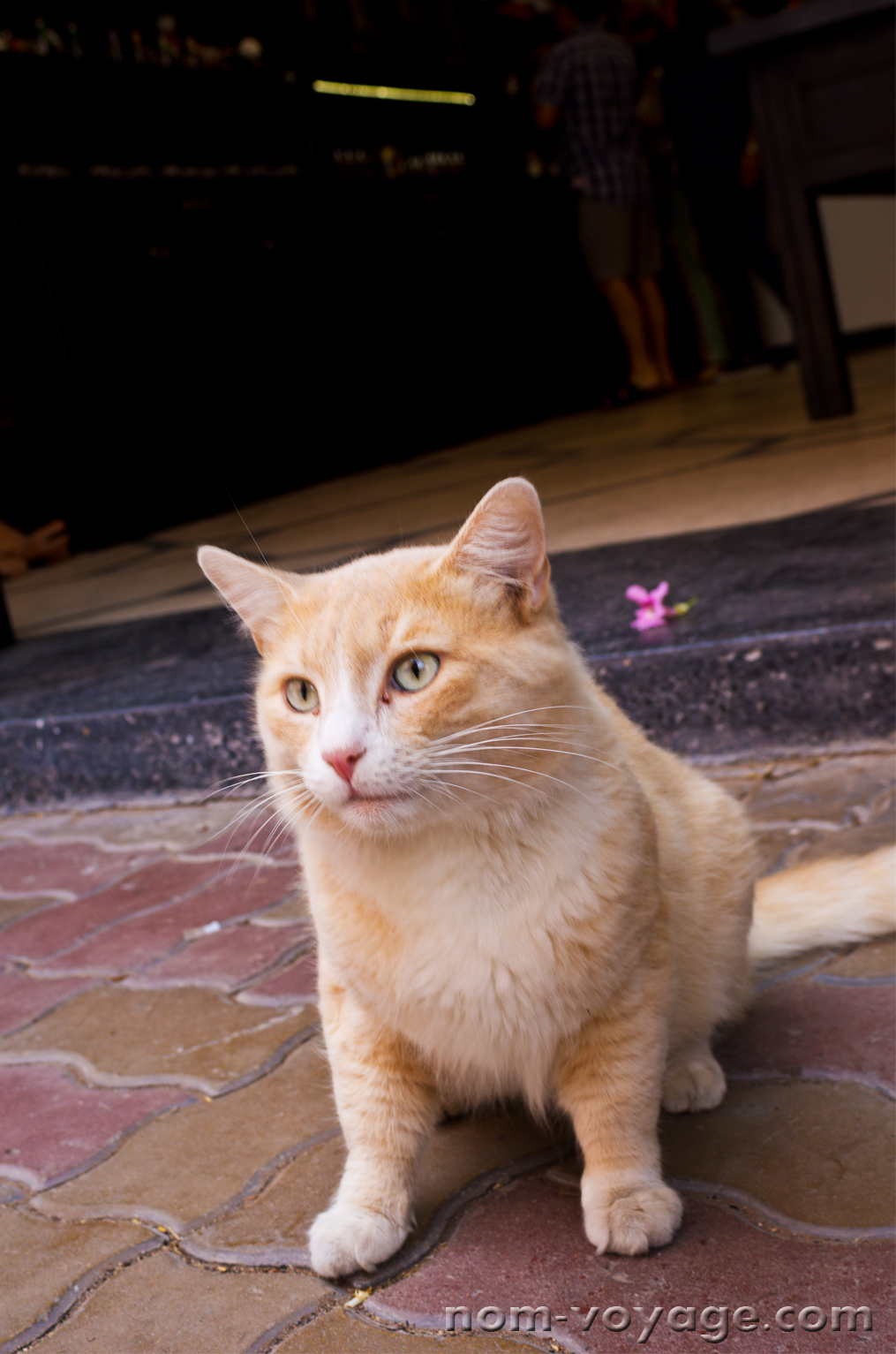 I met this cat outside a cafe in the Medina. He/she really loved cat treats.