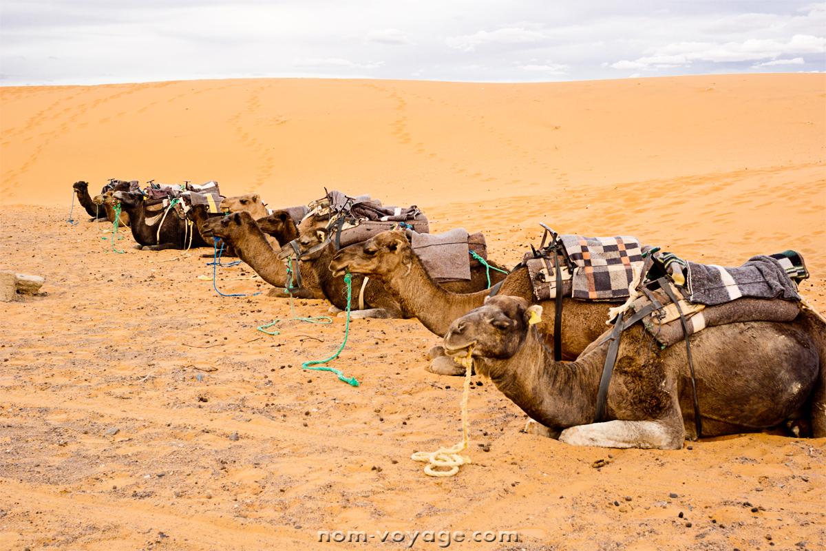 DesertTour23.jpg