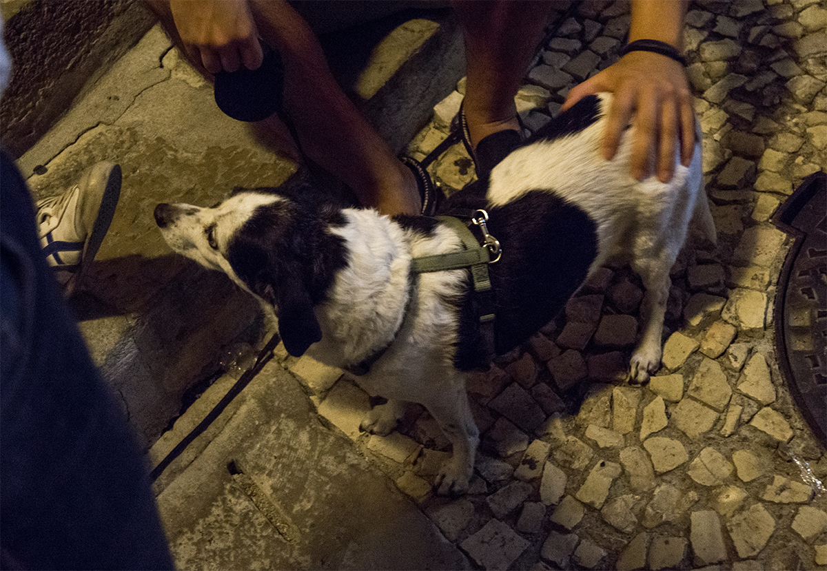 Quebra Jazz Dog.jpg