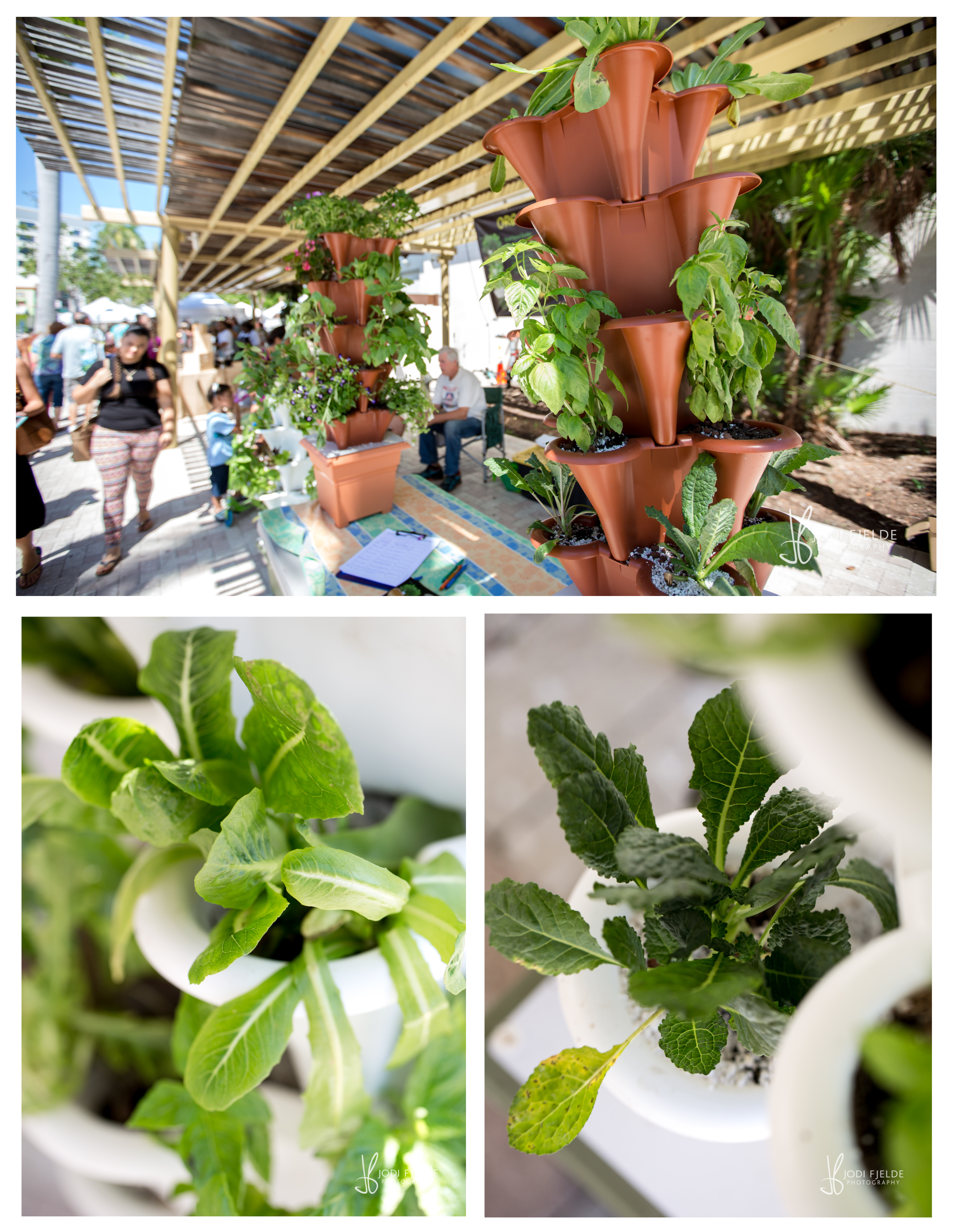 West_Palm_Beach_Green_Market_Organic_jodi_fjelde_Photography_10.jpg