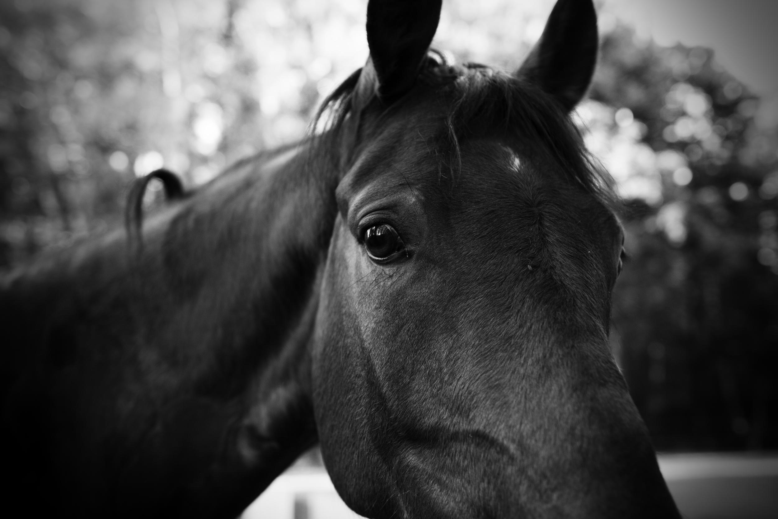 Horse Eye - Dmitry Kolesnikov