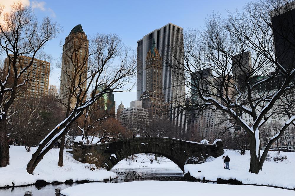 New York Urban Jungle