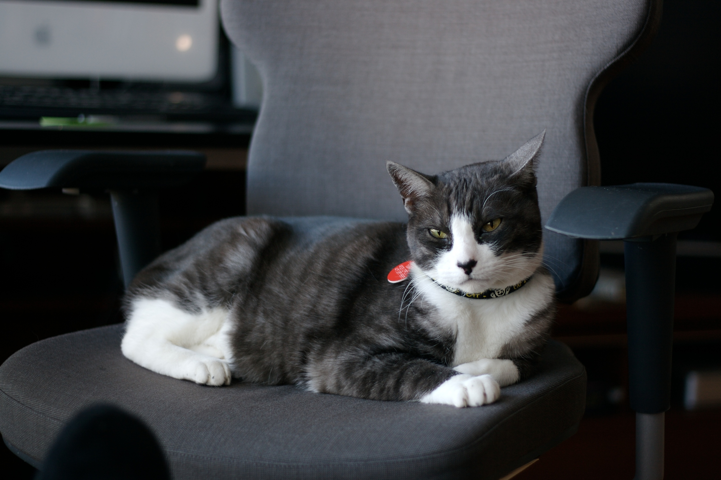 image_cat_officechair