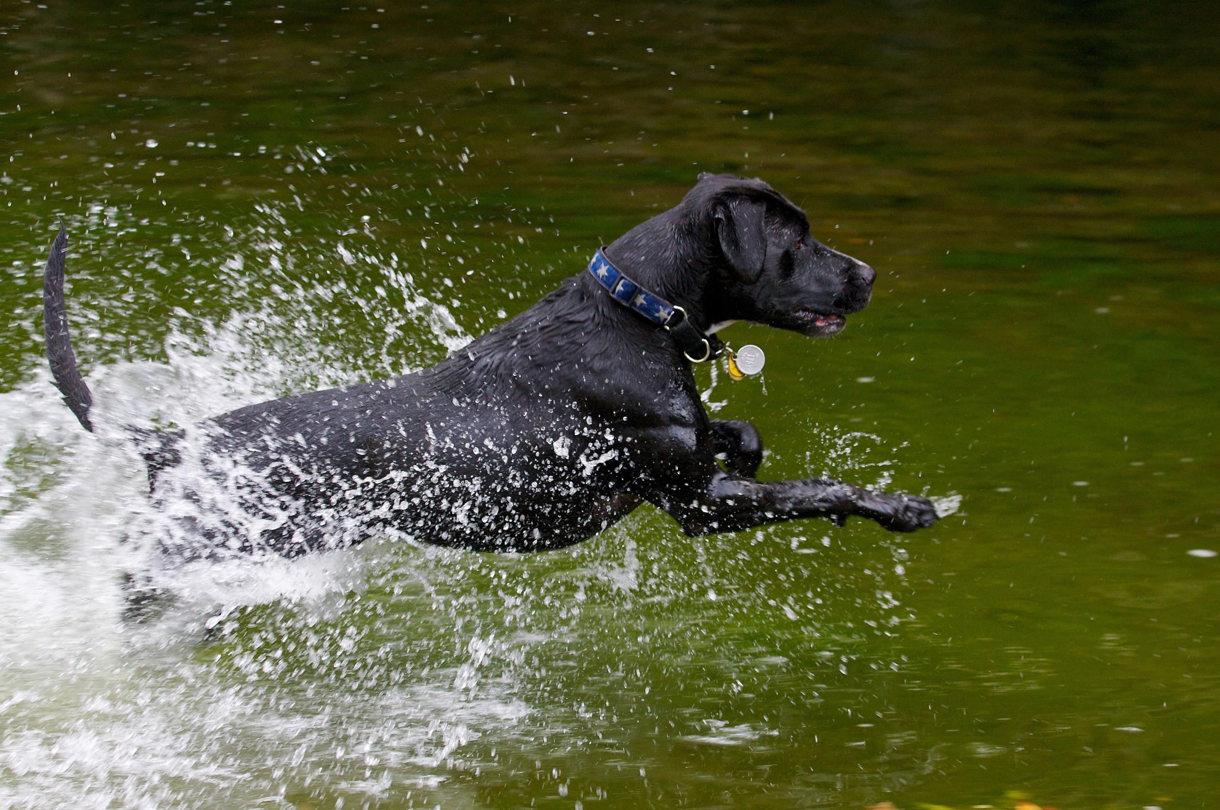 image_dog_clyde_jefffielding