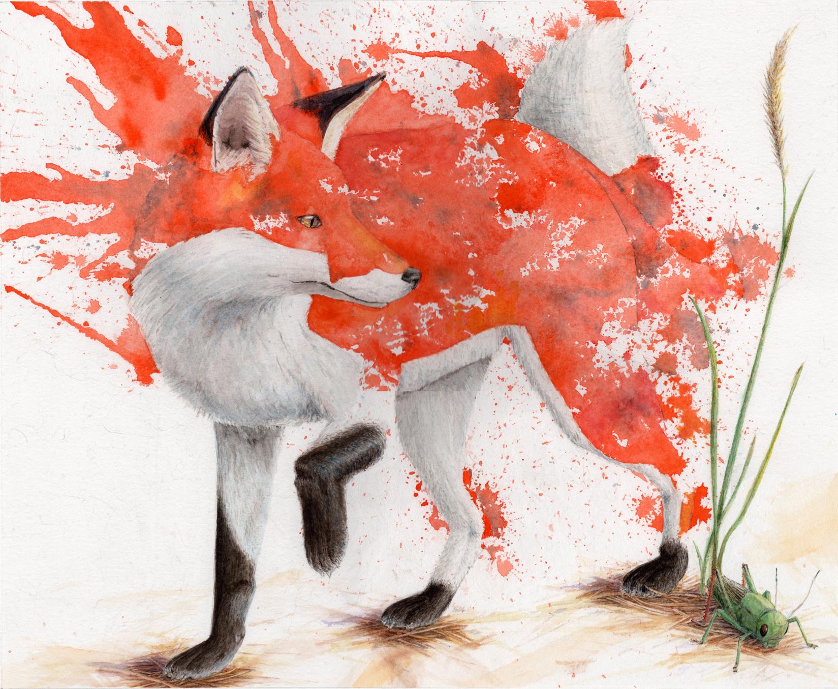 Schrodinger's Fox