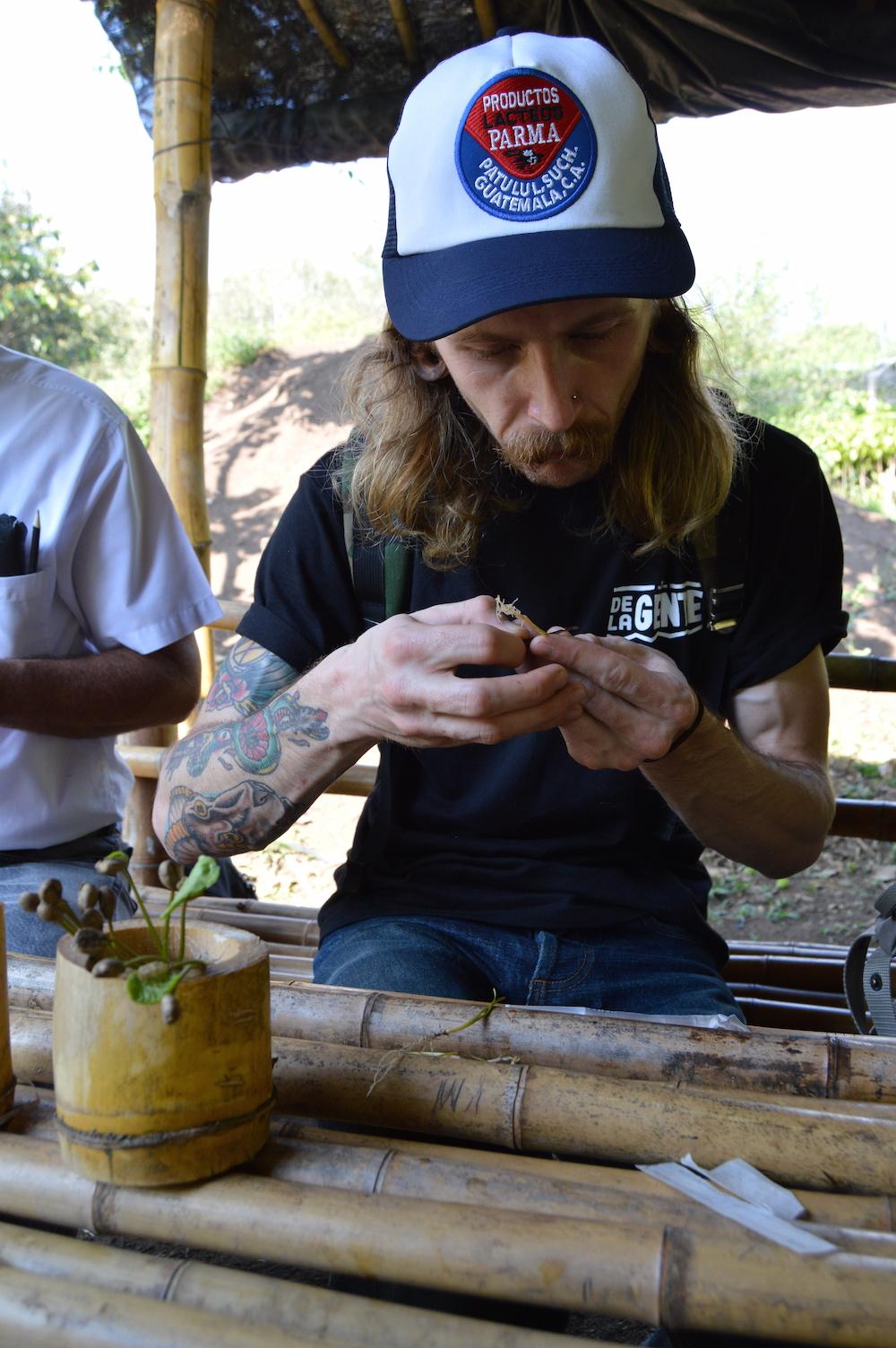 Grafting coffee plants at Finca San Jerónimo Miramar