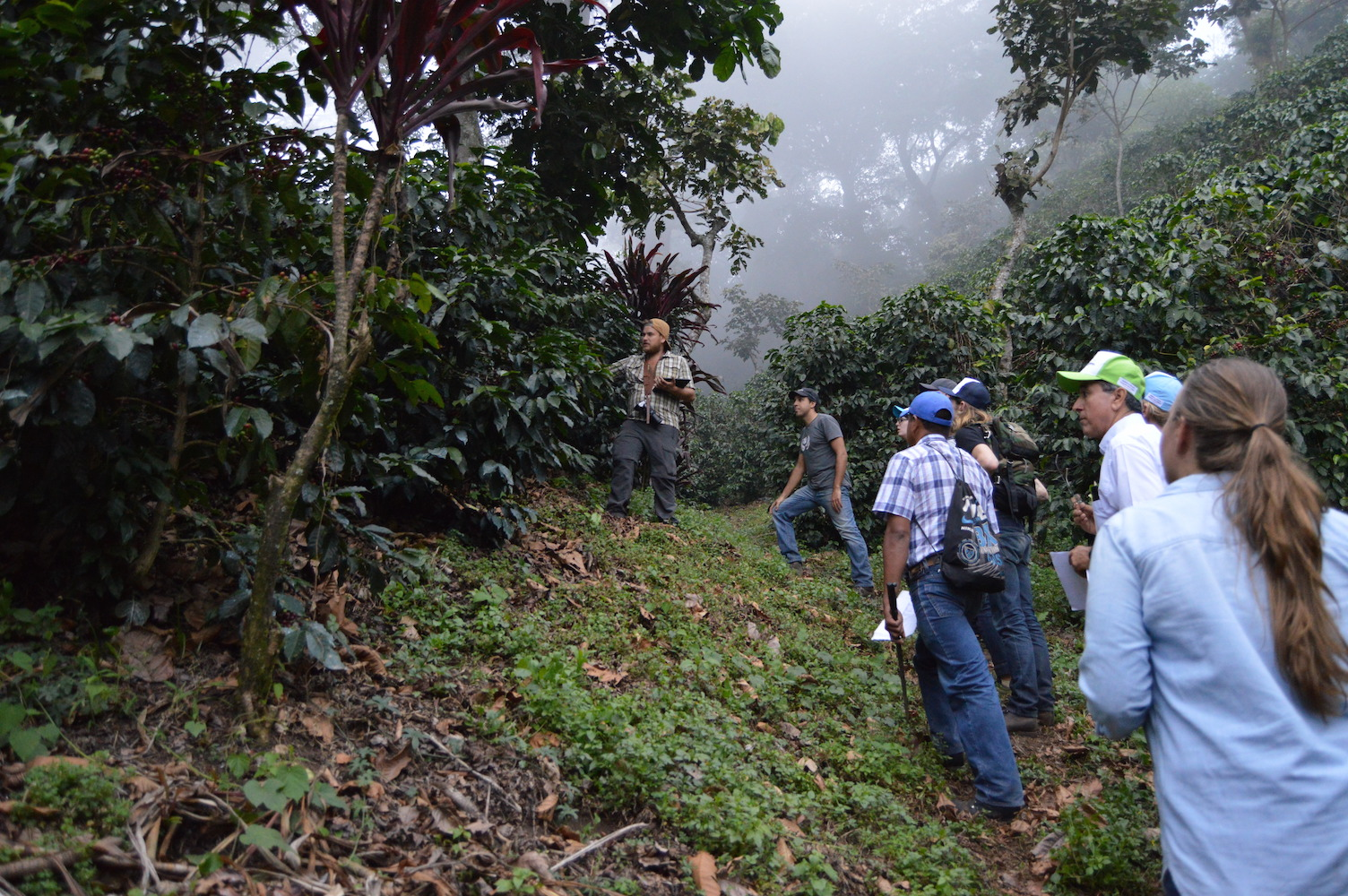 Learning about the Ethiopian coffee varietals at Finca San Jerónimo Miramar