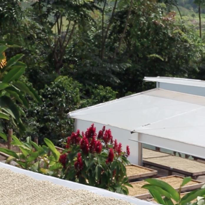 Coffee drying facility at Ecuador Finca Maputo