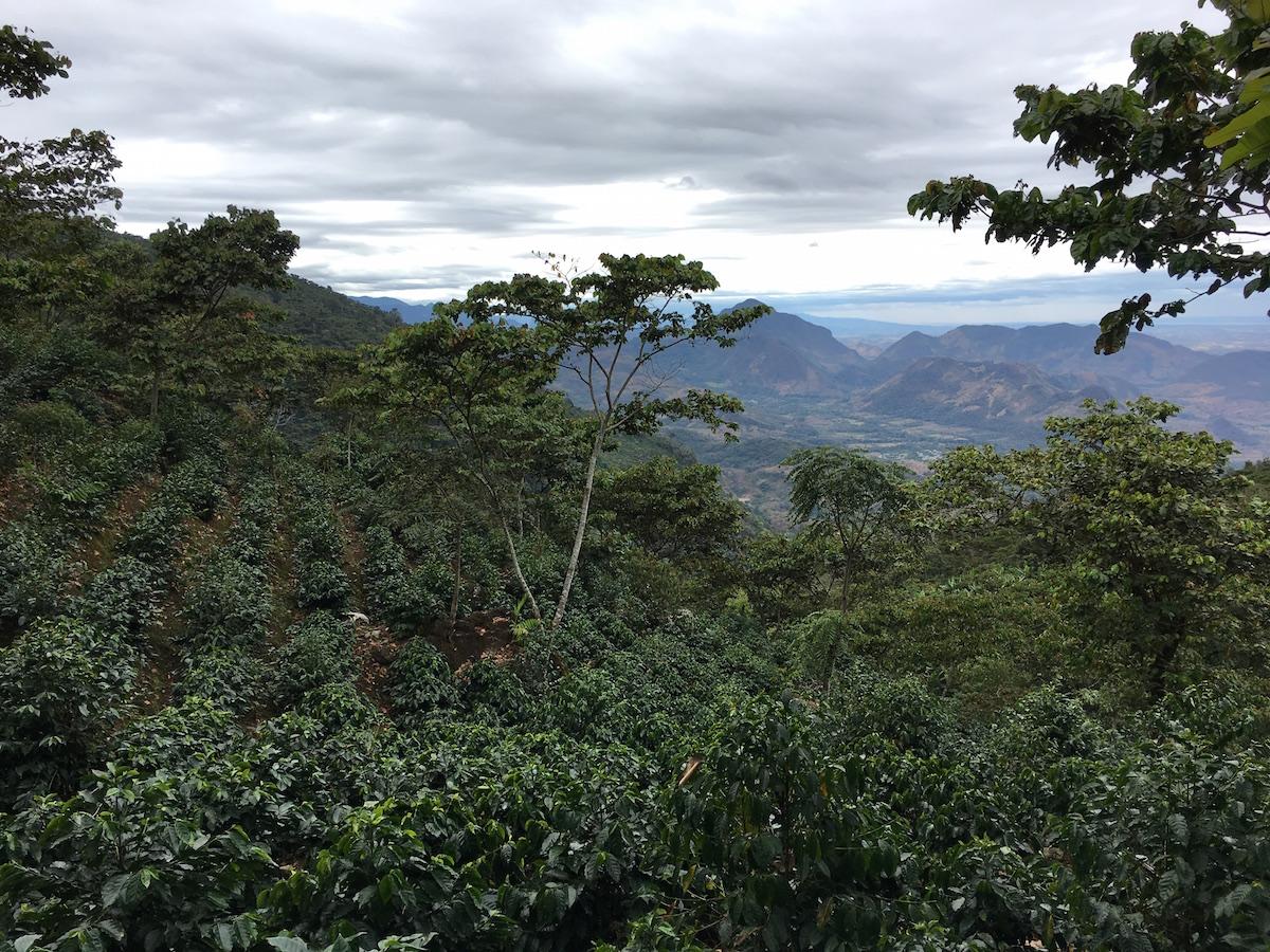 Guatemala - UPC