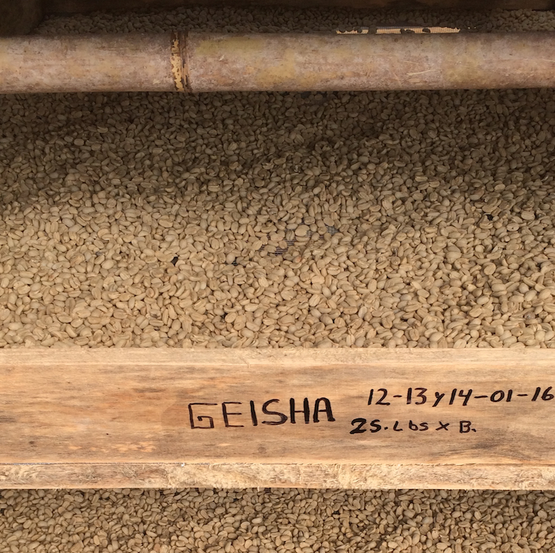 WASHED PROCESS GEISHA -