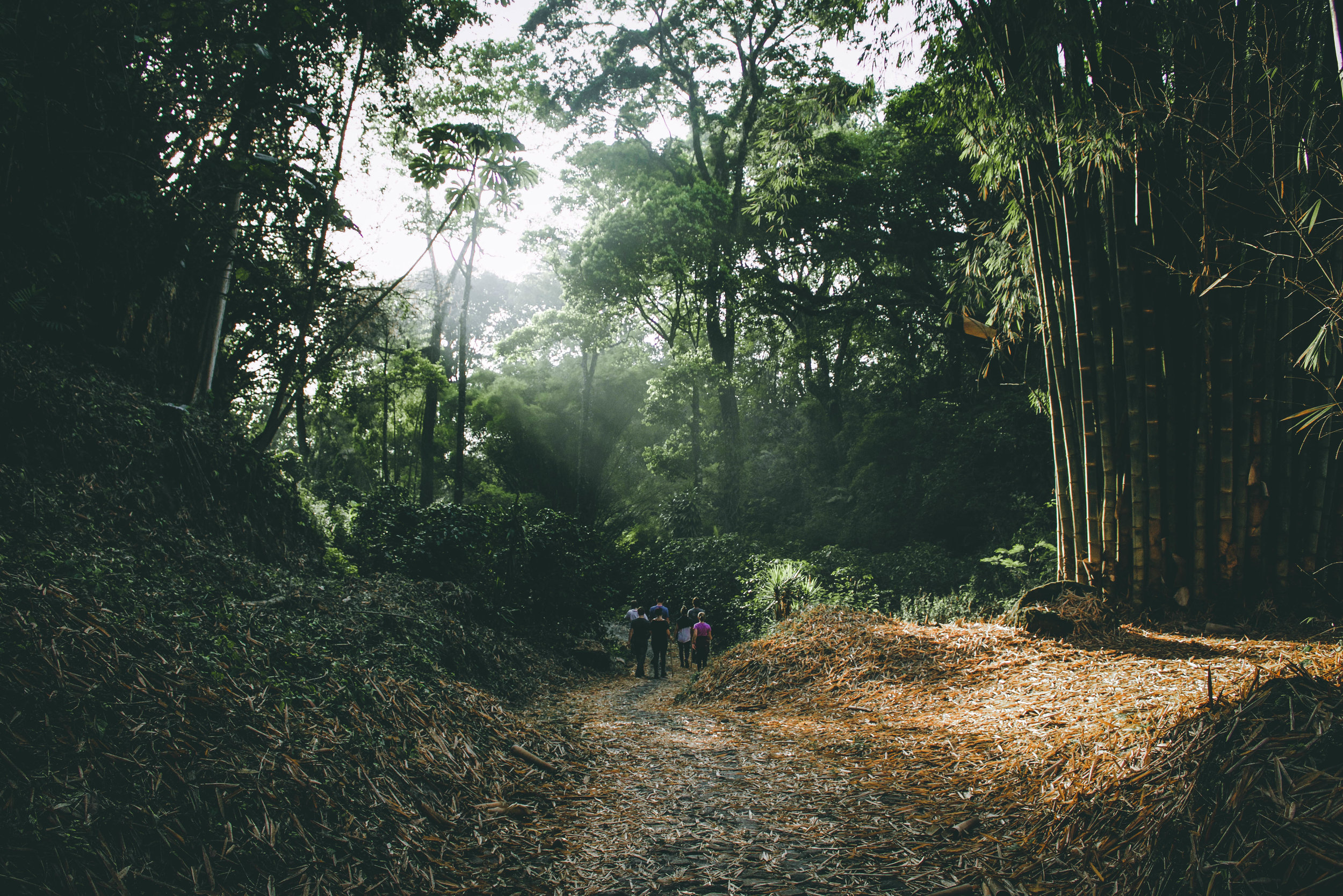 Visit a coffee farm