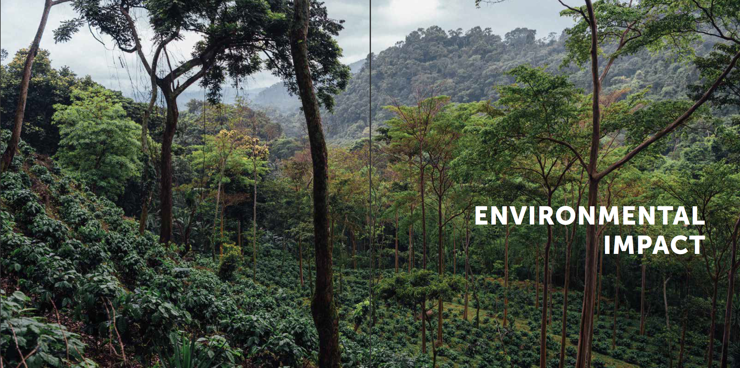nossa-familia-sustainability-report-p8.png