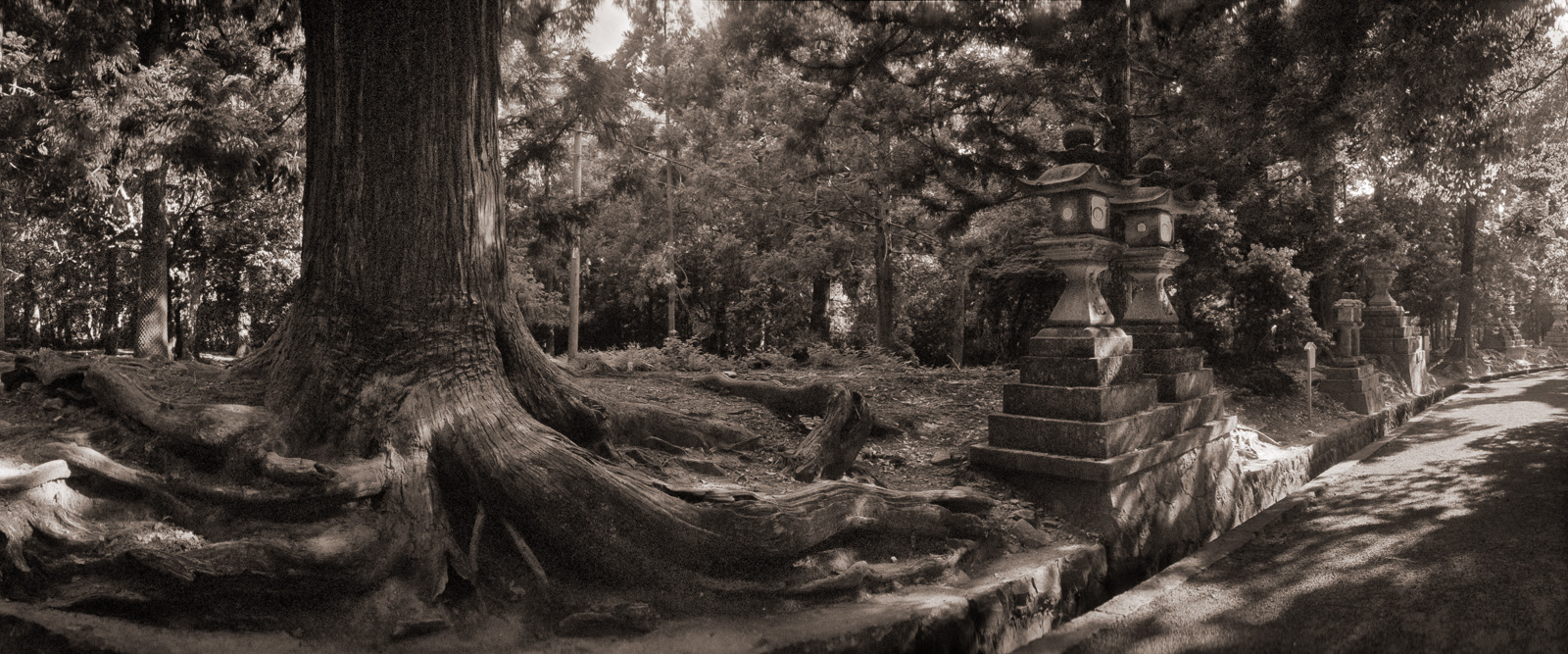 15-lanterns-and-tree-nara.jpg
