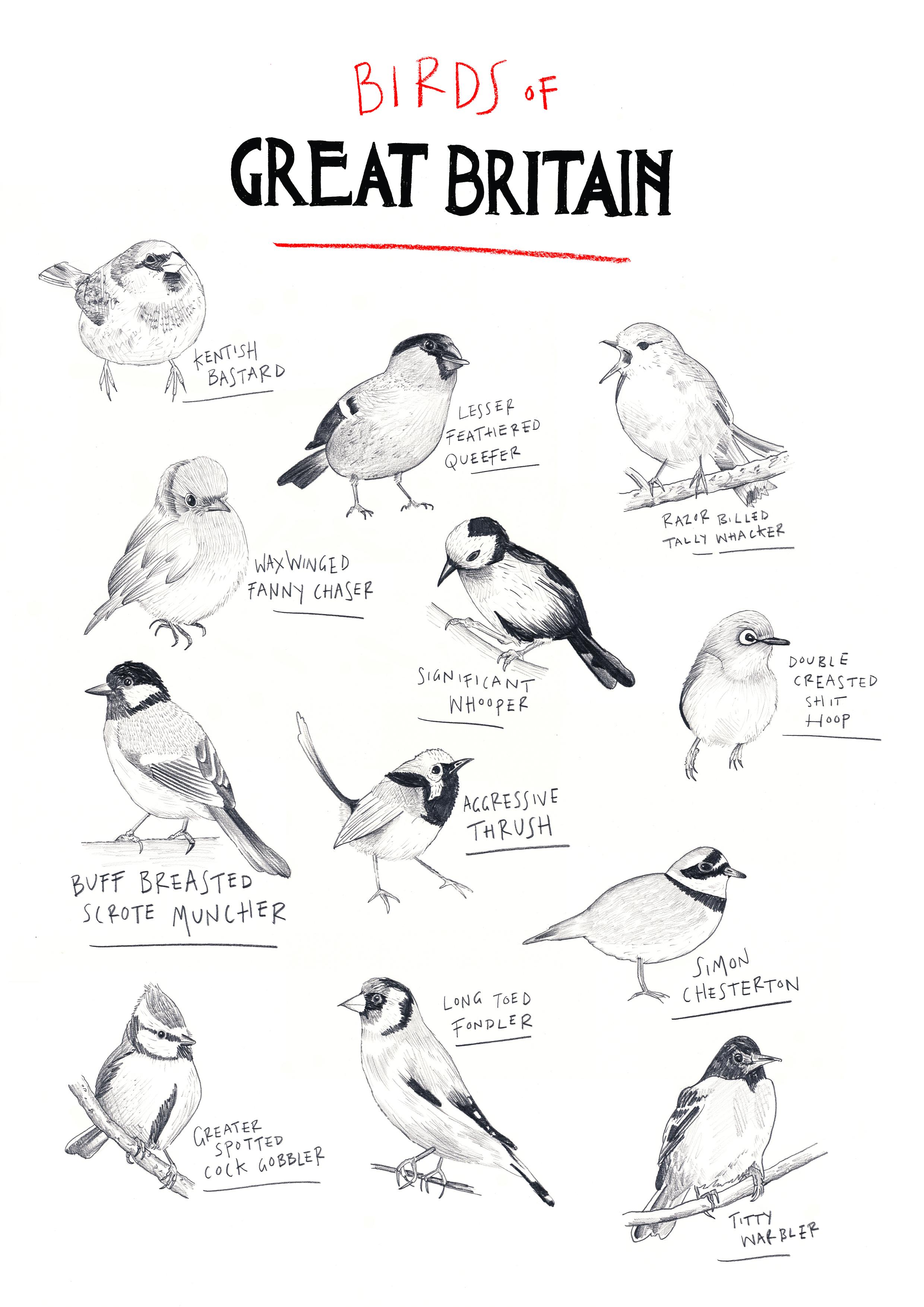 HoS_Birds of GB.jpg