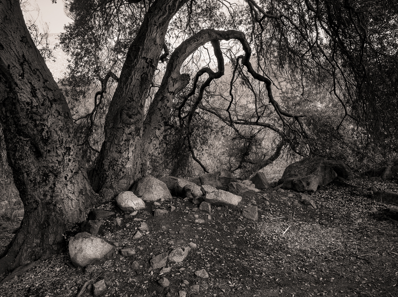 Nestling Rocks