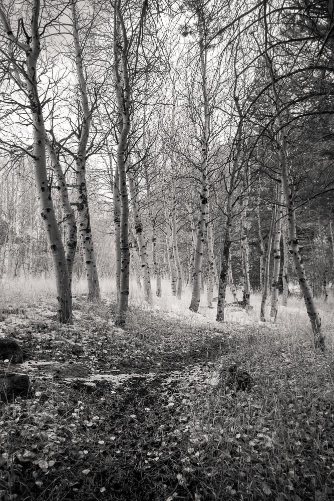 The Intimate Landscape Portfolio