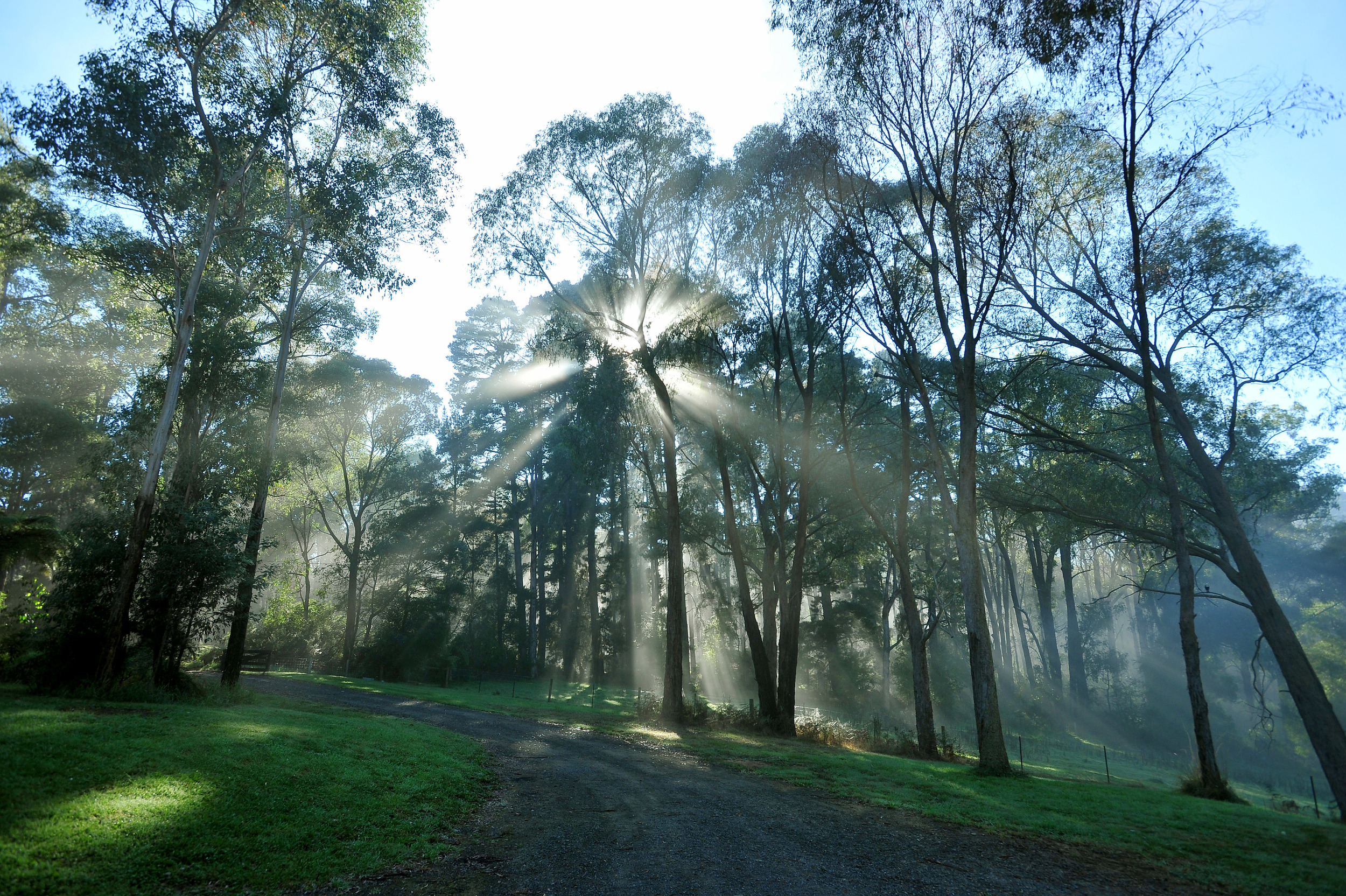 A bright new morning in Healesville Victoria.