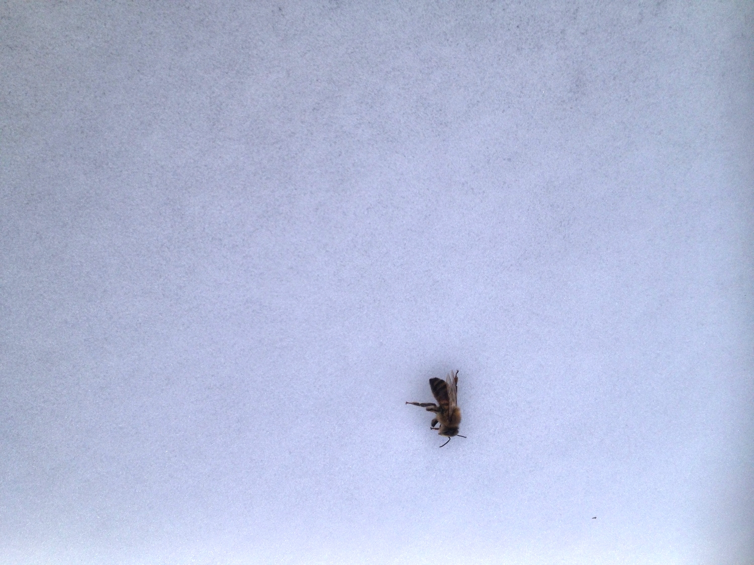 12. Help your bees survive the winter