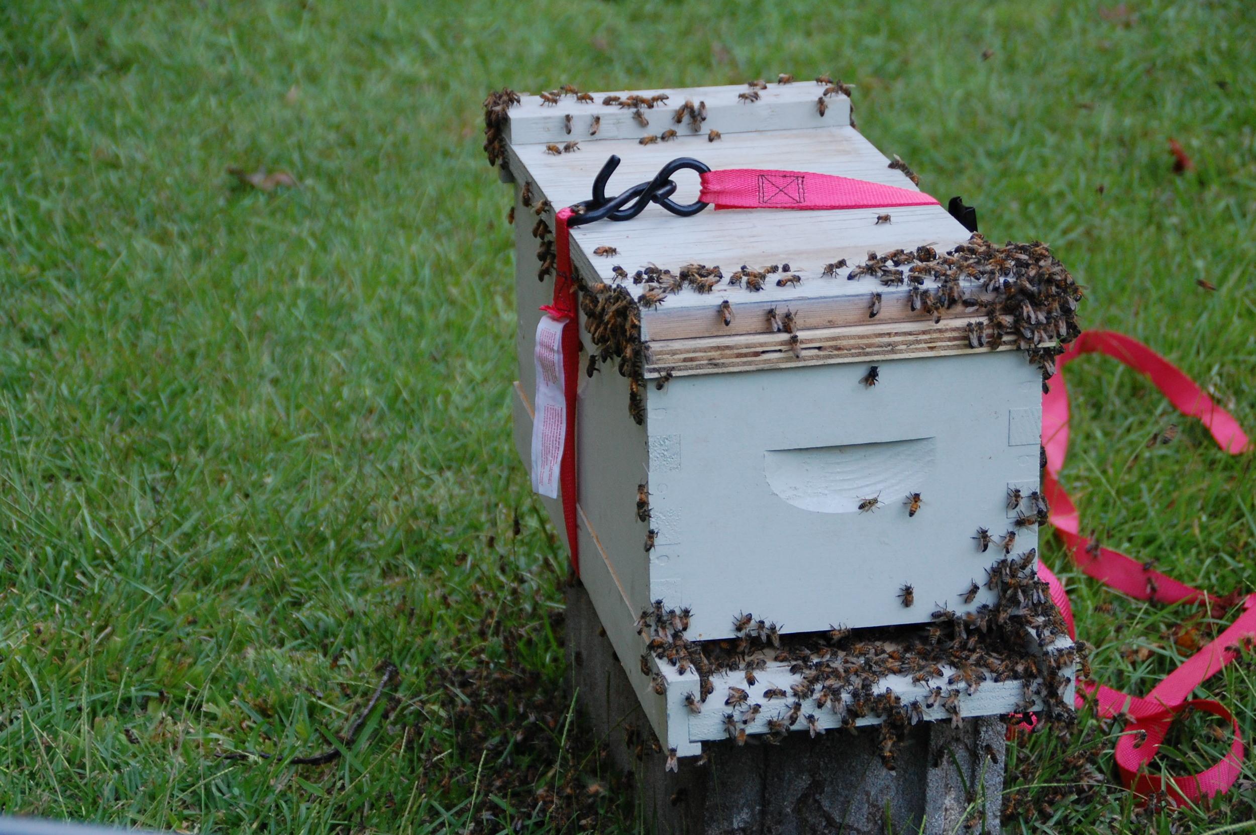 Swarm Box Medium Nuc