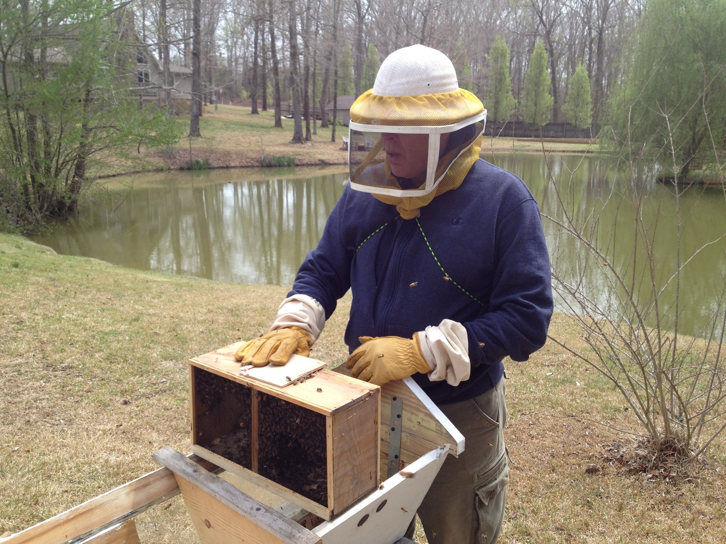 Installing Package bees in Top Bar Hive
