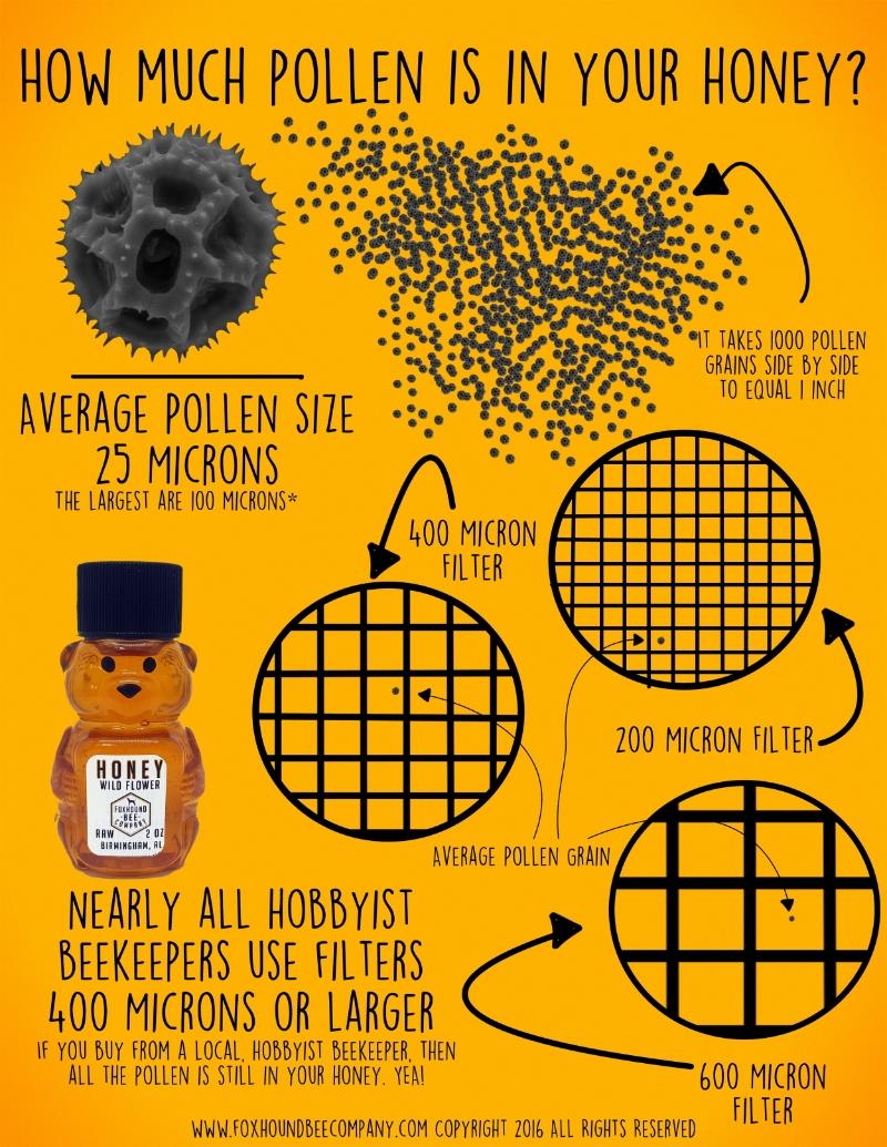 Foxhound Pollen Infographic