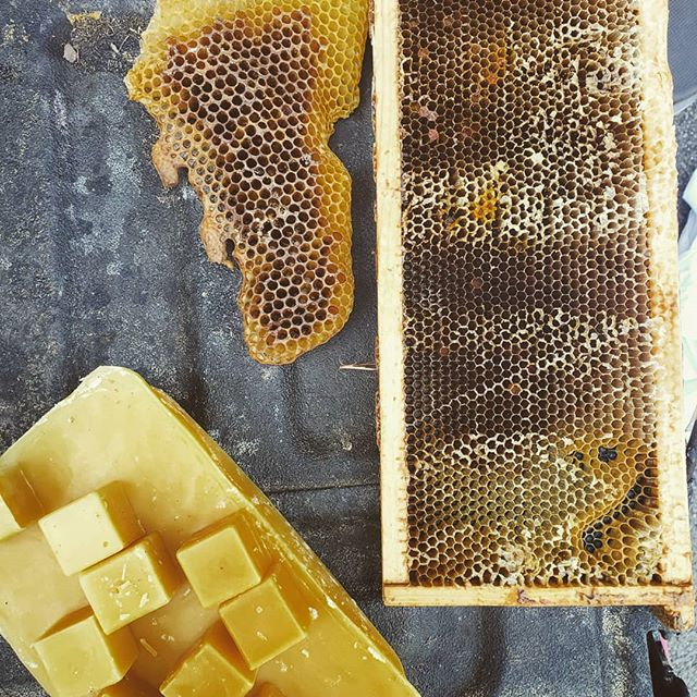 Getting set for this month's hive tour this morning. It's always fun opening up a bee hive for the first time with folks. Its gonna be hot, so lots of water and a couple capri suns for the kids. . . . . #beekeeping #bees #beekeeper #honeybee #savethebees #albeeks #instagrambham #alabama #nature #honey #rawhoney #buylocal #wildlife #insectsofinstagram #bee #hivetour