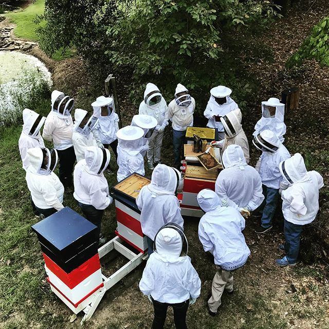 "We finished up our third, full day beekeeping class of the year and it was a great one. Sold out and had great students, even students came from out of state. Lots of great questions, lunch from #chipotle and we opened up a couple hives at the end of the class. One queen less and another hive that was doing well. Found a great queen and even ""helped"" a bee hatch out of her cell. We demonstrated some small hive beetle extermination as well. This was the last class scheduled for this year, but will rob more next year. Likely in January and March. Thank you to everyone who came out. . . . . .  #beekeeping #bees #beekeeper #honeybee #savethebees #albeeks #instagrambham #alabama #nature #honey #rawhoney #buylocal #wildlife #insectsofinstagram #bee #teaching #classes #beekeepingclass #education #handson #beesuits #foxhoundbeeco #samford"
