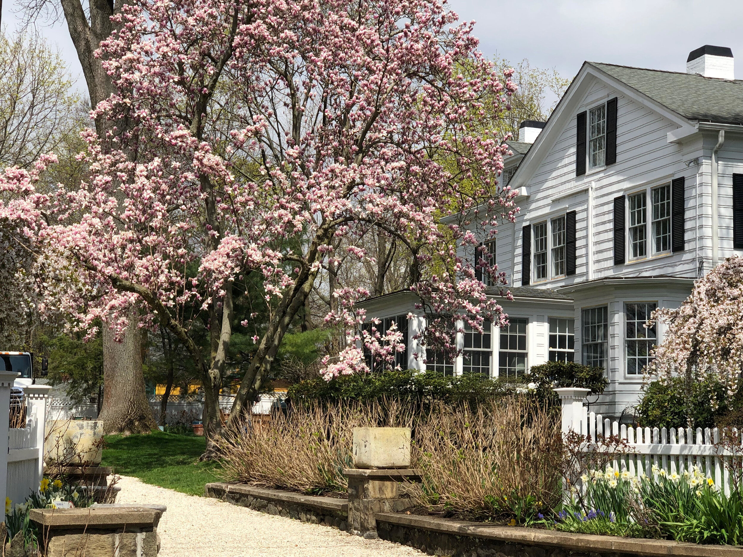 A classic Old Greenwich landmark garden on the corner of Sound Beach and Shore Road is the stunning Evans house and garden. The flowering magnolia and cherry trees are a happy sight on the way to Greenwich Point.