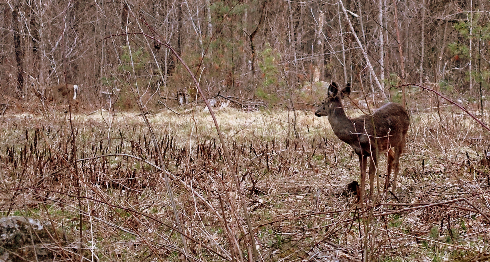 Deer on the trail - photo - Rob vandermark.JPG