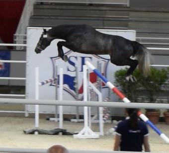 Ekano DKS 3 years jump.png