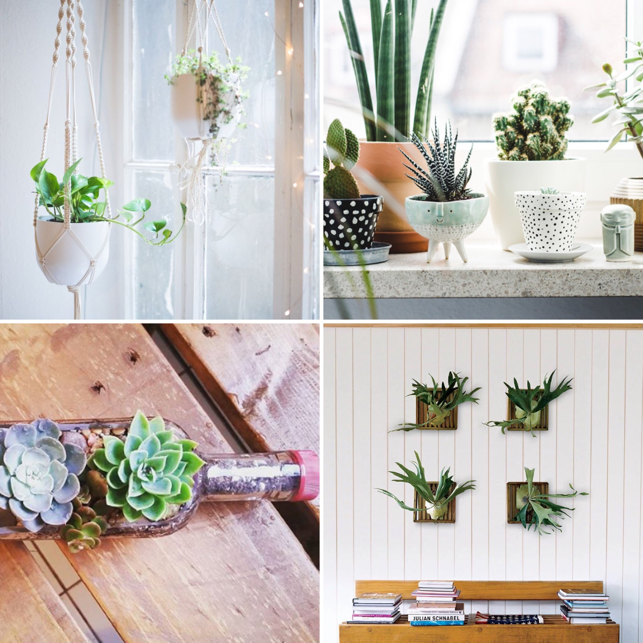 Trending Now:     Macrame Planters; Hand painted pottery in a simple color palette or with copper & gold accents; Air Plants & Succulents for easy care in any space.    Give your spirit an outlet to create a new plant container for your home and reap the benefits daily. Noho Designs LOVES  Once Again Succulents  in Waimanalo! Check them out to see how you can create some green mana for your hale!  Other photo credits go to heylilahey.com & atmine.com