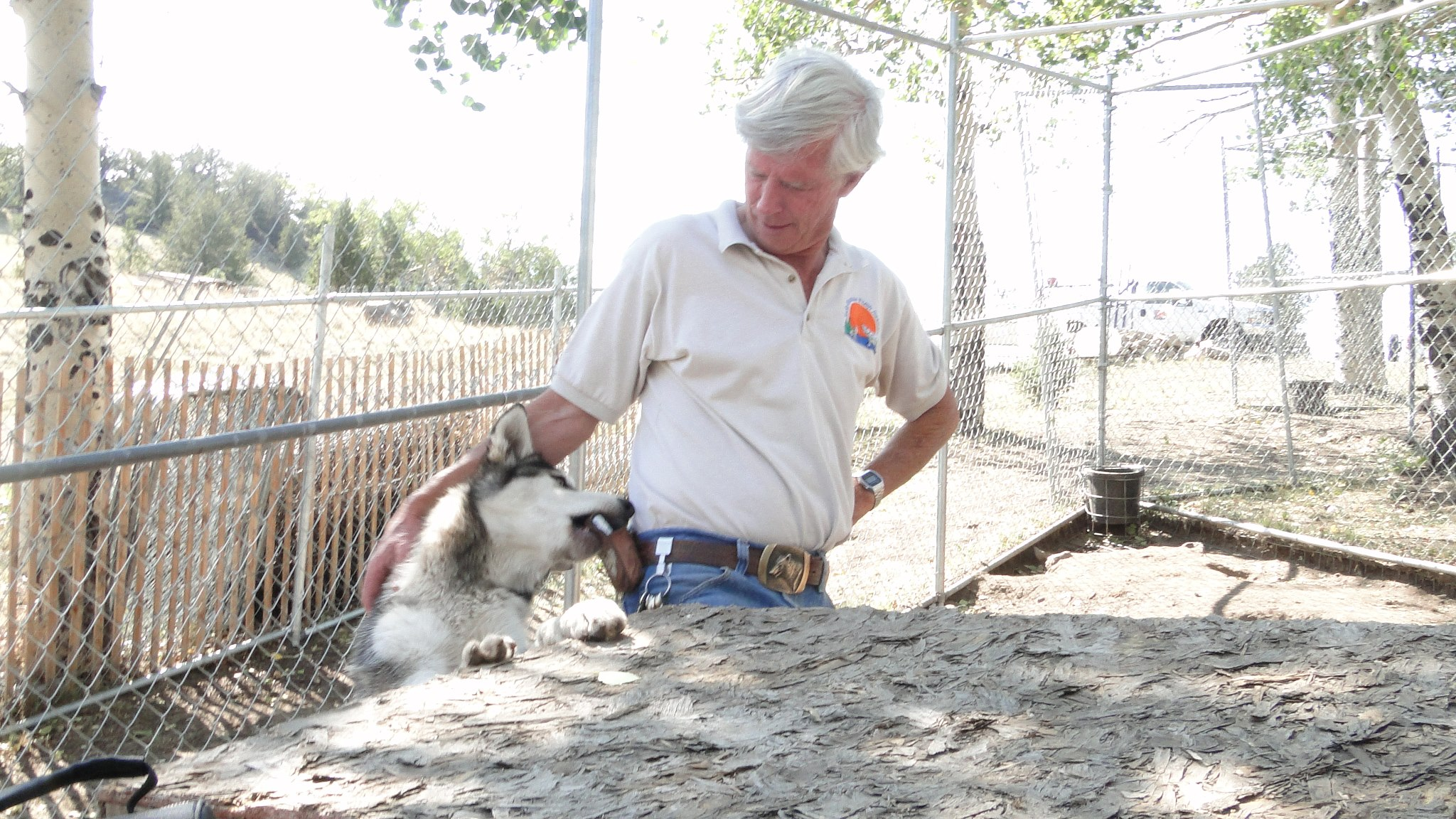 Mark Johnson with one of the wolves
