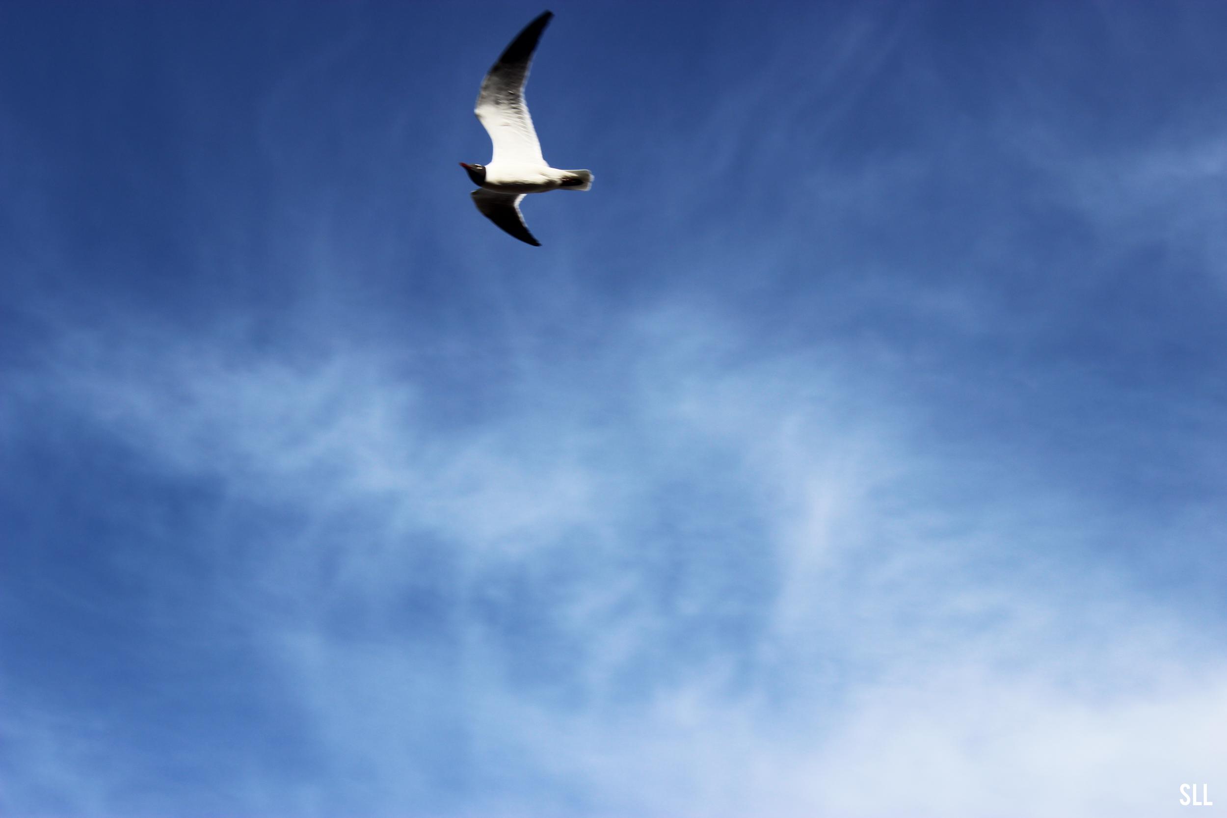 Bird(1).png