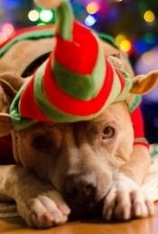 Addison Baker- ready for Christmas!