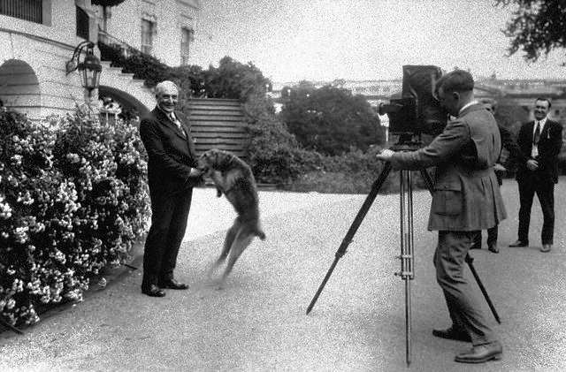 """President Harding and his Happy Airedale """"Laddie Boy"""""""