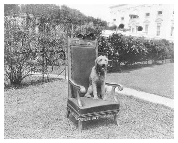 """Laddie Boy"" In His Presidential Cabinet Meeting chair"