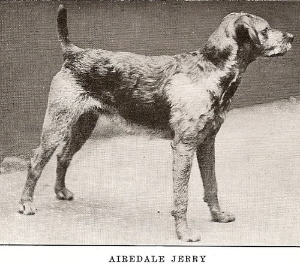 AIREDALE JERRY ca 1888