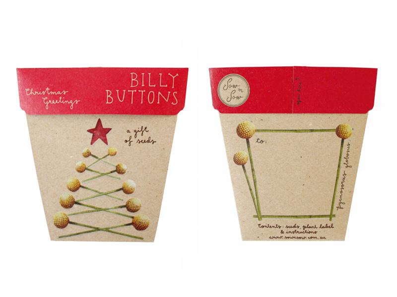 billy buttons.jpg