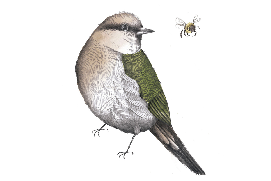 bird with bee.jpg