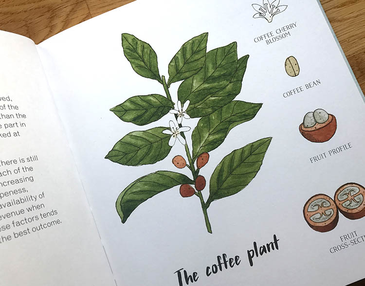 the coffee plant.jpg