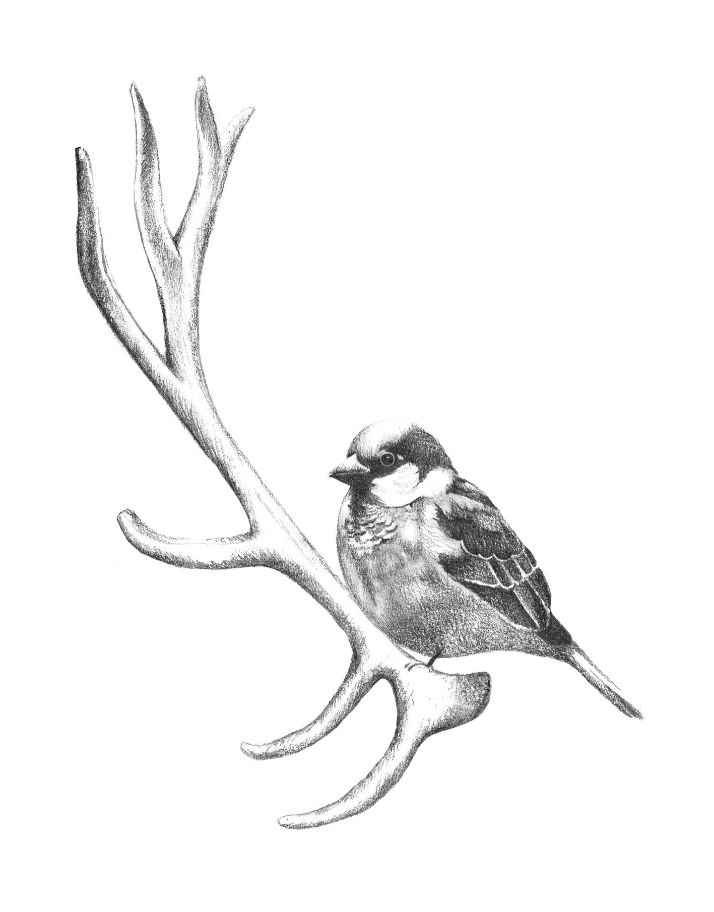 bird on antler copy.jpg