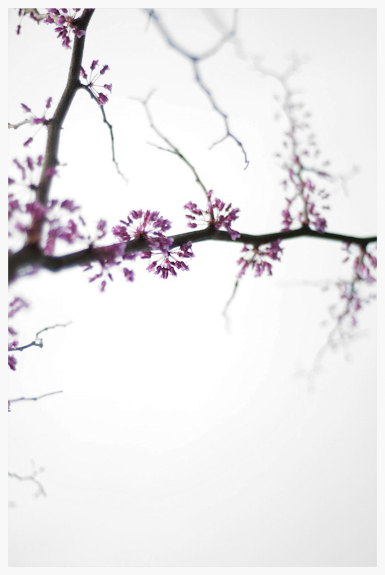 30 Days in Spring-5.jpg