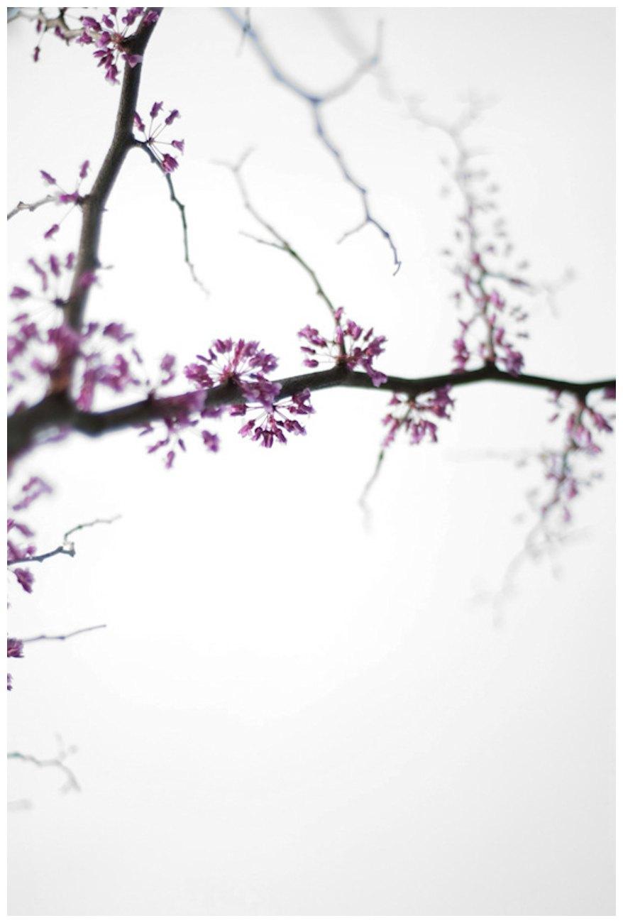Anita Licis-Ribak_30 Days in Spring-4.jpg