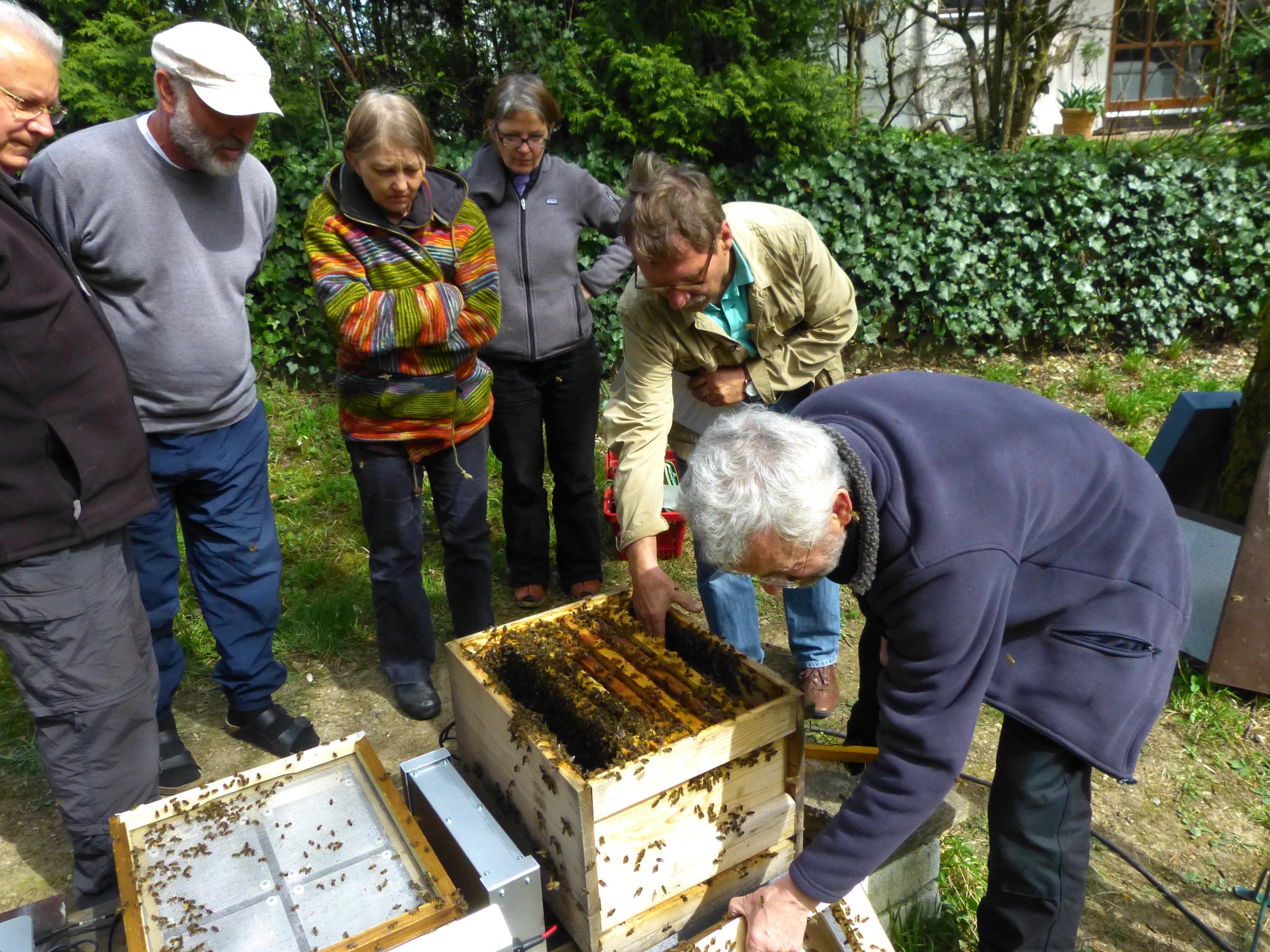 Bienensauna-Behandlungsende Zorneding