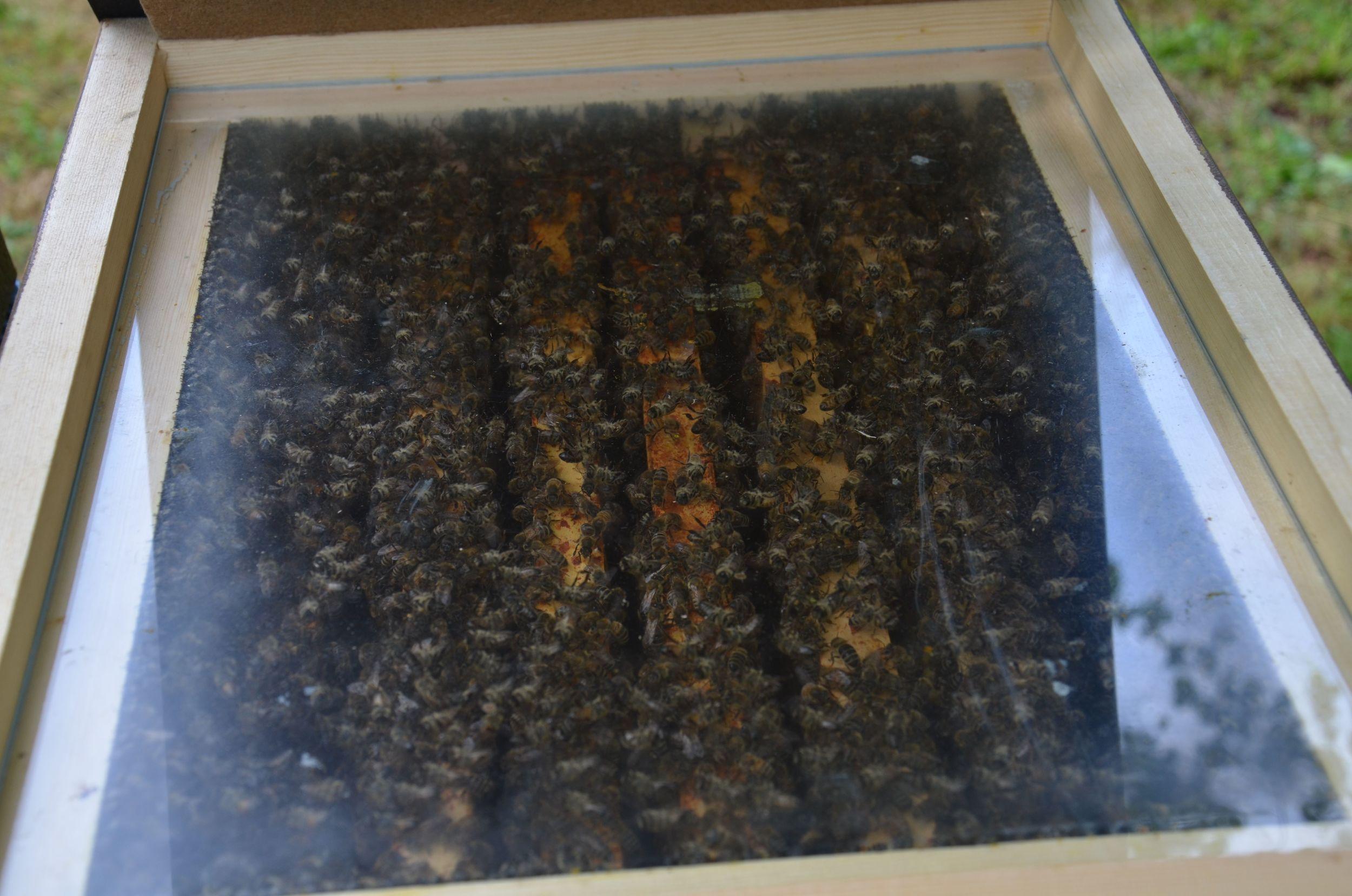 Bienensauna-Behandlug Schwalbach