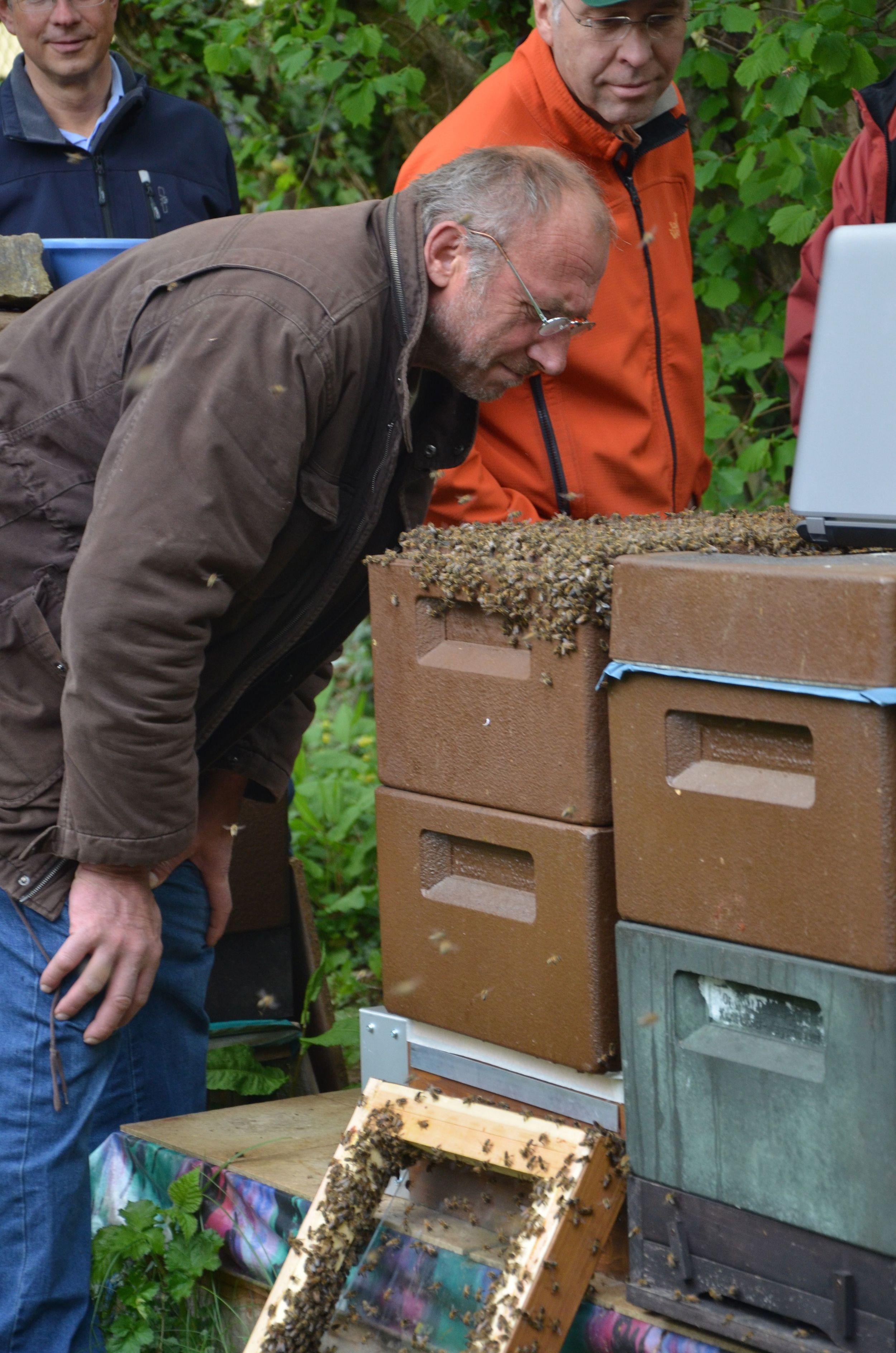 Bienensauna-Vorführung Schwalbach