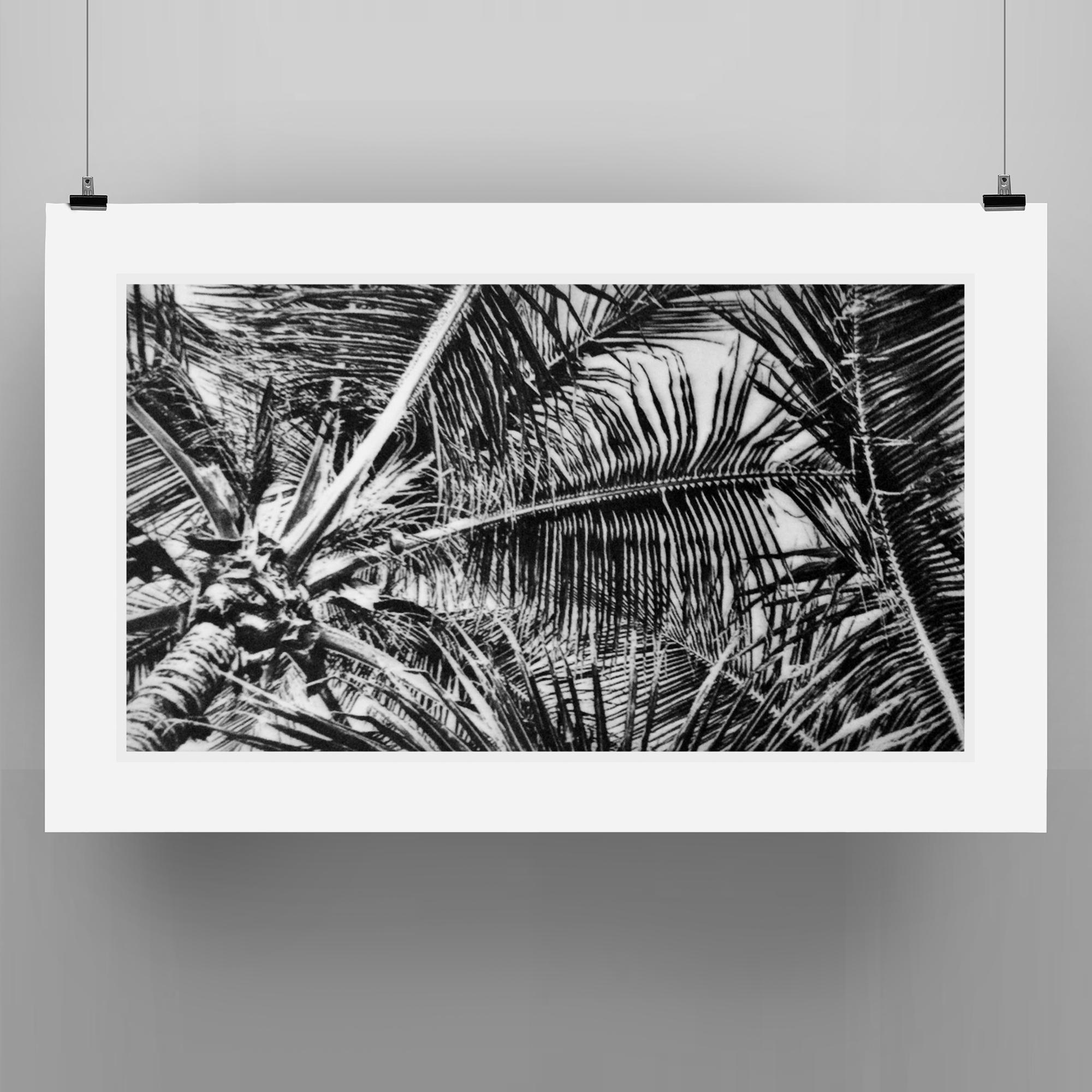 print-palm.png